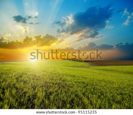 sunset over agricultural green field - stock photo