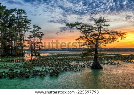 Sunset over Bald Cypress from Grassy Island on Reelfoot Lake National Wildlife Refuge in Tennessee.