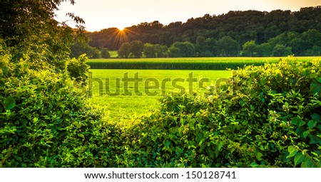 Sunset over bushes and a farm field in Southern York County, Pennsylvania.