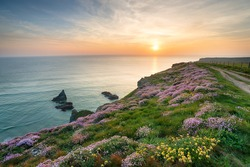 Sunset over cliffs carpeted with wild flowers above Bedruthan Steps on the Cornwall coast