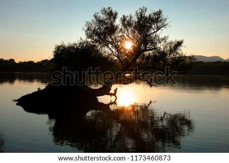 Sunset over Danube river with a silhouette of a tree in the water and the sun
