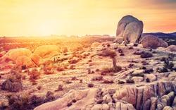 Sunset over desert in Joshua Tree National Park, California, USA.