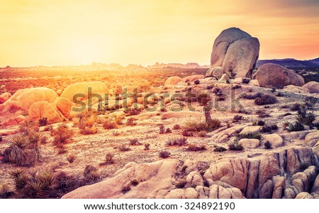 Sunset over desert in Joshua Tree National Park, California, USA.