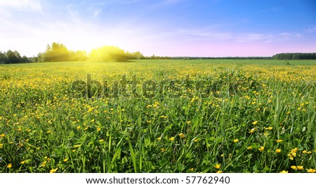 Sunset over flower field.