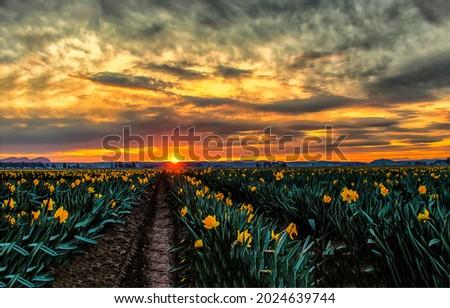 Sunset over flower fields landscape. Flower field at sunset. Field flowers at sunset. Sunset flowers field