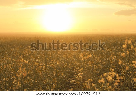 sunset over forest with summer fog #169791512