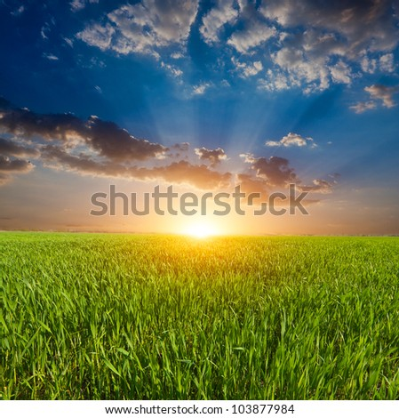sunset over green field in steppe