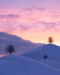 Sunset over hills with singular trees in winter