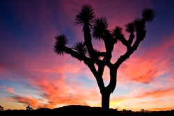 Sunset over Joshua Tree National Park, California, US.