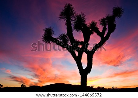 Sunset over Joshua Tree National Park, California, US.