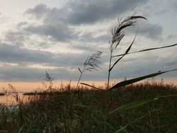 Sunset over lake with reeds and grasses in foreground