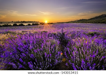 Sunset over lavender field in Bulgaria