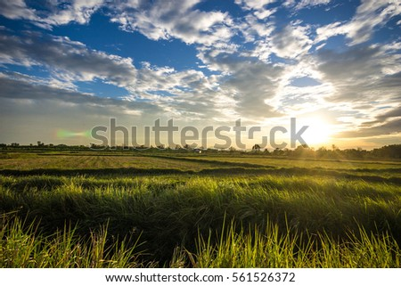 sunset over meadow #561526372