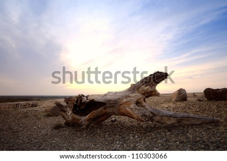 sunset over old dead trees  in desert,xinjiang china