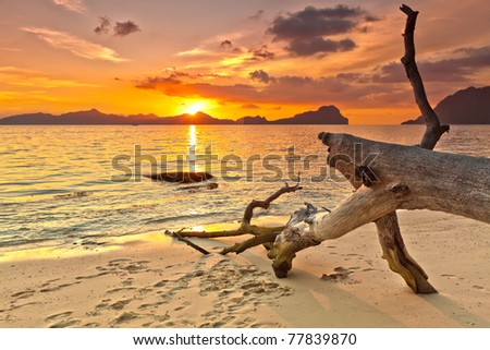 Sunset over the island. Dry tree on the foreground