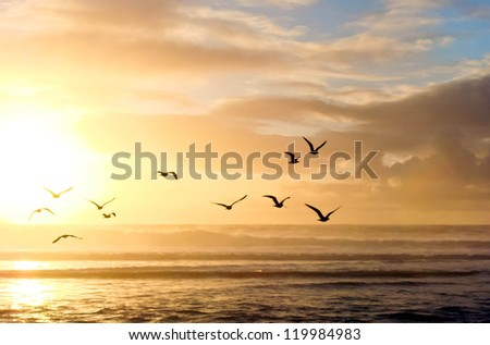 sunset over the sea #119984983