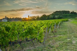 Sunset over the vineyards of the Bordeaux region.