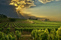 sunset over the vineyards of the South of France
