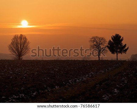 Sunset over trees and plough