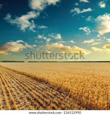 sunset over wheat field #126512990