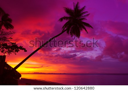 Sunset palm tree silhouette over ocean