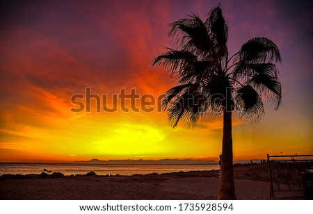 Sunset palm tree silhouette view. Sunset palm tree scene