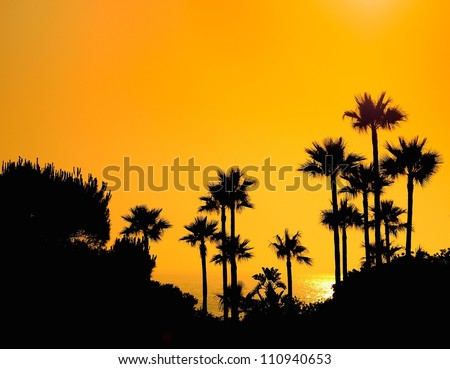 Sunset palms in beach La Barrosa in Cadiz, Spain. - stock photo