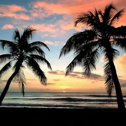 Sunset, paradise beach and palm trees