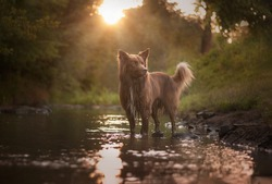 Sunset photography with brown dog and water.