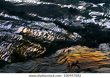 Sunset Reflected in the Terraced Rice Fields of Yuan-Yang, Yunnan Province, China