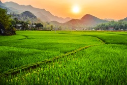 Sunset Rice Field