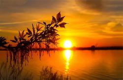 Sunset river horizon silhouette branch landscape. River sunset horizon. Sunset river panorama