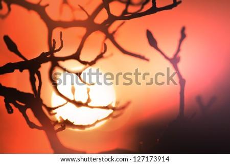 Sunset scene #127173914