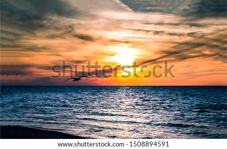 Sunset sea horizon landscape. Seagull silhouette sunset sea horizon. Sunset sea horizon view. Sunset horizon sea