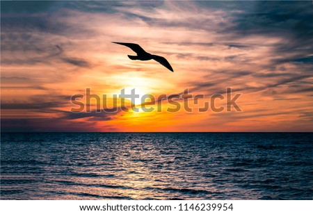 Sunset seagull silhouette on sunset water sky horizon landscape. Sunset seagull silhouette water scene. Sunset seagull in sky view