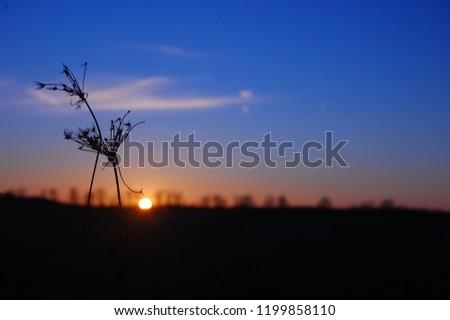 Sunset Silhouette Flower #1199858110