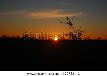 Sunset Silhouette Flower #1199858113
