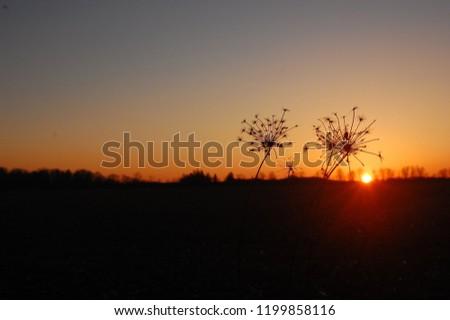Sunset Silhouette Flower #1199858116