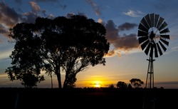 sunset silhouetting a gum tree and a bore water wind mill