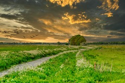 Sunset summer landscape with banks Rolderdiep between Rolde and Anderen with exuberantly flowering cow parsley, Anthriscus sylvestris, against sky with clouds and warm colors of the setting sun