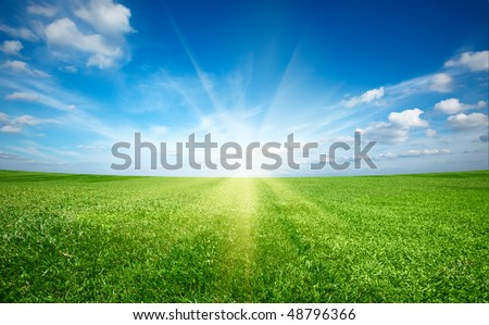 Sunset sun and field of green fresh grass under blue sky - stock photo