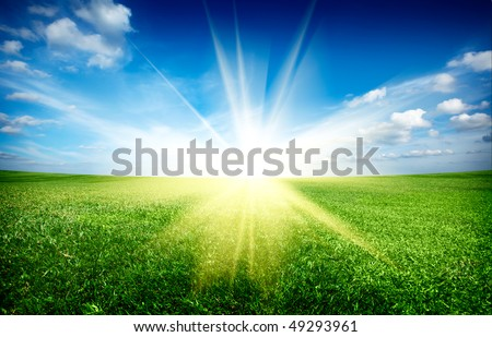 Sunset sun and field of green fresh grass under blue sky #49293961