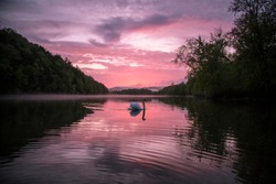 Sunset swan on the Allegheny River near Warren, Pennsylvania.