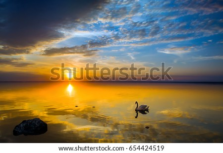 Sunset swan silhouette on lake landscape