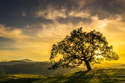 Sunset through an oak tree near San Jose California