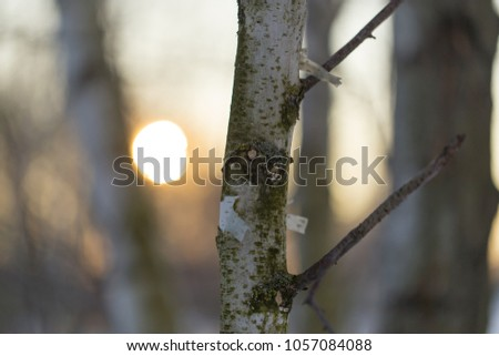 Sunset through the branches of trees in the forest #1057084088