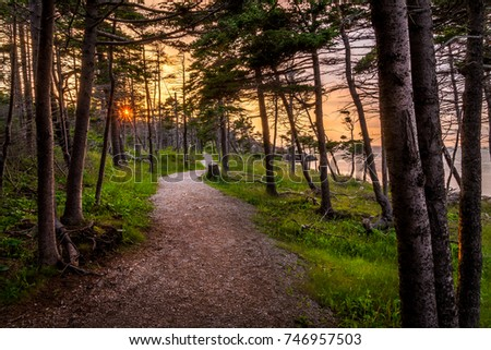 Sunset through trees on Newfoundlands West coast. #746957503