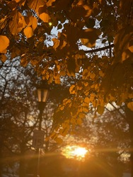 Sunset through trees with lamppost and street sign