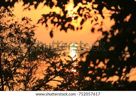 sunset tree.Silhouette.selective focus.