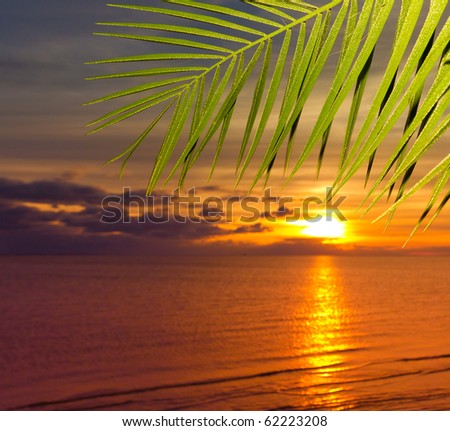 Sunset under Palms